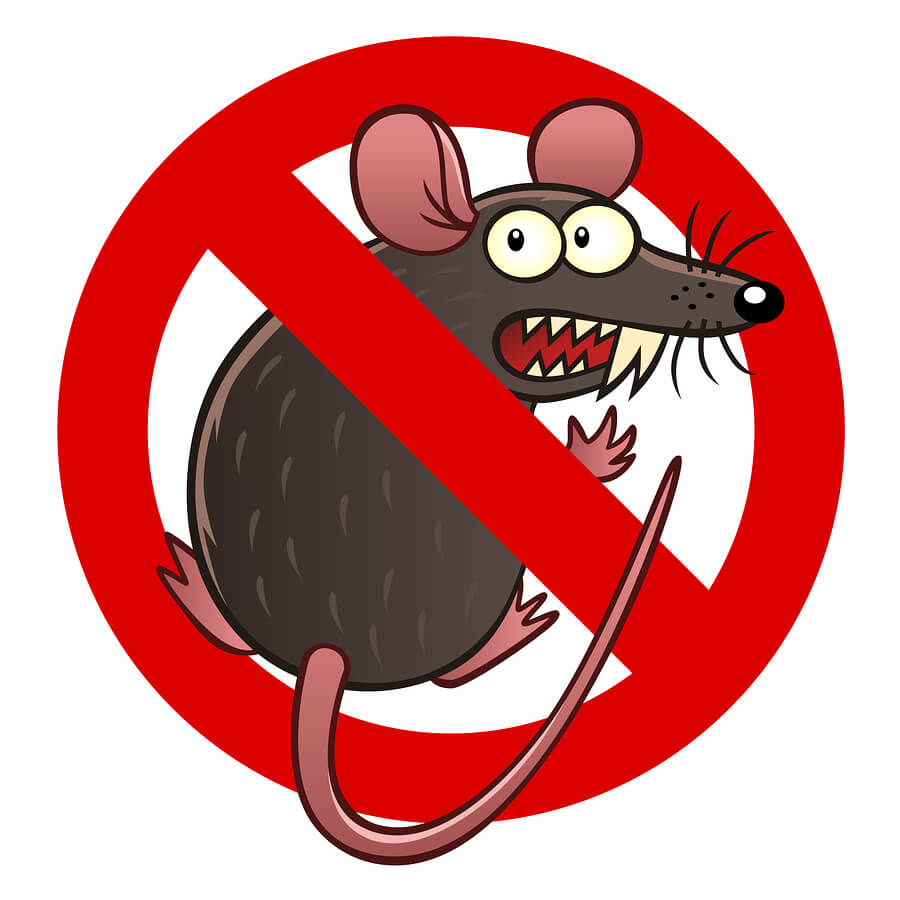 Prevent Rodents and Rodent Damage in Portland, OR